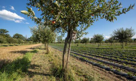 Agroforestry (Foto: Gabriela Brändle, Agroscope)