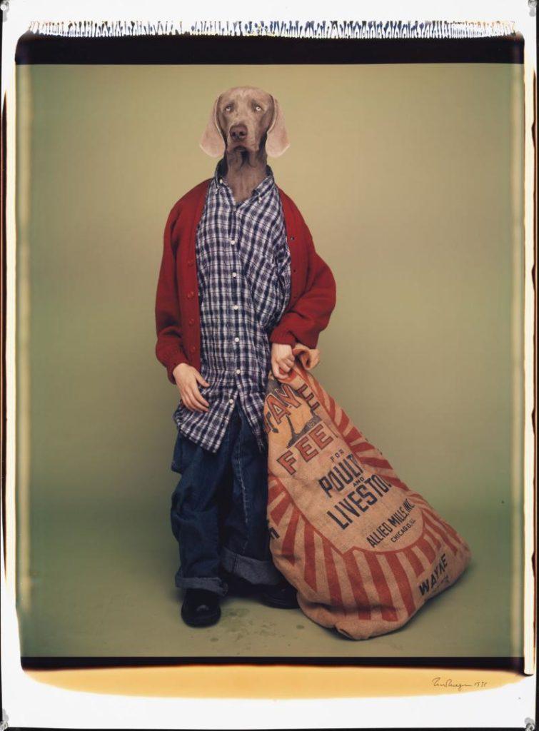 William Wegman, «Farm Boy», 1996, Polaroid a colori