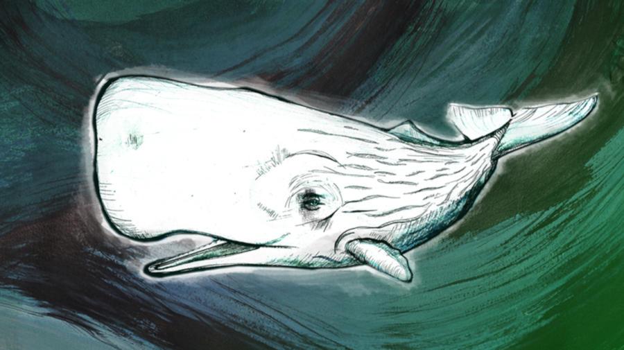 """RSI - Logo della trasmissione """"Moby Dick"""" di Rete Due"""